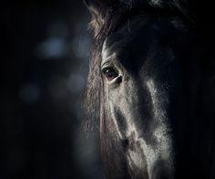 How to Photograph Black Animals :: Digital Photo Secrets