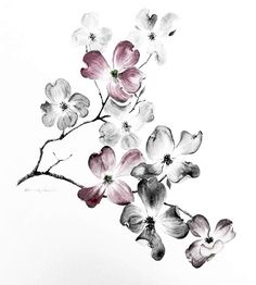 Dogwood watercolor (not sure of the artist, I had saved this to a folder on my desktop for tattoo reference material). I made this black and white in PS...was all pink.
