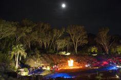 The Red Centre Garden during Enlighten - Luminous Botanicus.