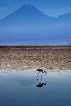 Chaxa Lagoon, Atacama Desert, Chile