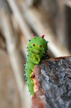 """earth-song:  Hello, Mr. Caterpillarby~erinhawkrising  """