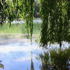 Green reflection #SouthAfrica #summer