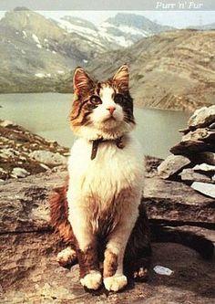 Tomba, of the Berghotel Schwarenbach, Switzerland: The amazing story of Tomba, feline mountain climber of the Alps and extreme #adventurecat!