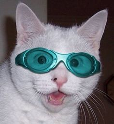 45 Cats Wearing Glasses