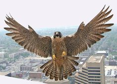 Wow! Cool view of a #falcon landing