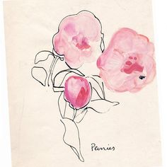 My personal Faves #peonies #illustration #illustratorsoninstagram #illustrationart #illustrators #botanical #botanicalart #botanicalillustration #inkstagram #spring #inspiration #watercolor #commisison #print