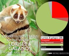A quarter of the loris family in threatened due mostly to the pet trade and deforestation