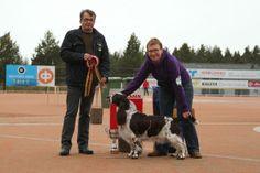 Raahe 9.5.2013 (FCI 5, 6 & 8). FCI 8 + BIS: Baskethill's Jubilee Blossom, English Springer Spaniel