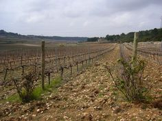 The Valencian Terroir