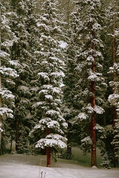 bluepueblo:    Snow Forest, Summit County, Colorado  photo via madeline    ^_^