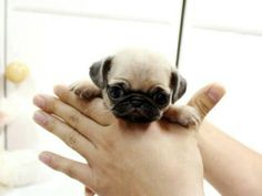 @myheroin1 - death by cuteness