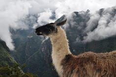 #peru #trekking #trilha #machupicchu #inka #jungle #viagem #travel #aventura #adventure