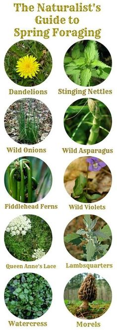 Wild plants, foraging