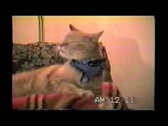 Happy Caturday! Still like that old time rock n' roll? Check out this funny feline's version of kitty karaoke.