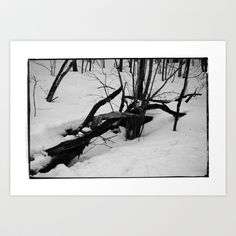 Norwegian forest V Art Print by Plasmodi - $17.00 Snow, Art Prints, Outdoor, Art Impressions, Outdoors, Outdoor Games, The Great Outdoors, Eyes, Let It Snow