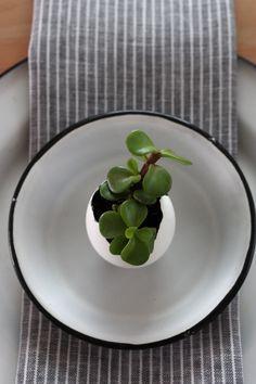Eggshell mini planters at each plate.