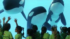 What is the true story of SeaWorld? These are the facts about SeaWorld that activists don't want you to see. Watch this video as trainers, veterinarians and other zoological professionals set the record straight: Orcas Seaworld, Seaworld Orlando, World C, Sea World, Mission Beach San Diego, Animal Rescue Stories, Best Commercials, Marine Fish, Veterinarians