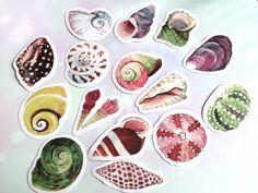 40 sea shell sticker big seashells colorful by StickersKingdom