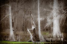 Ghost Trees Photograph by Jo Ann Tomaselli - Ghost Trees Fine Art Prints and Posters for Sale #photography #joanntomaselli