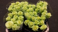 #Rose #Rosa #GreenGene; Available at www.barendsen.nl