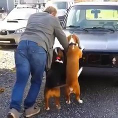 and Paws! Informations About Helping hands….and Paws! Cute Funny Animals, Cute Baby Animals, Animals And Pets, Cute Animal Videos, Funny Animal Pictures, Funny Dog Videos, Funny Dogs, Cute Puppies, Cute Dogs