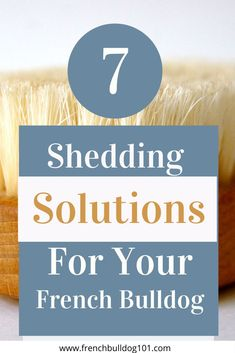 Love your French bulldog but hate dealing with their hair? Check out my top 7 shedding solutions for Frenchies! Learn how to care for their coat and minimize shedding! French Bulldog Shedding, Food Dog, Pet Shed, French Bulldog Facts, Love Your Pet, Mans Best Friend, Training Tips, Dog Owners, Dog Breeds
