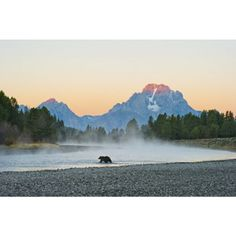 First Light - Grizzly Bear Grand Teton National Park, WyomingFirst Light - Grizzly Bear - $375.00