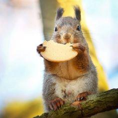 Ce photographe attire les animaux avec de la nourriture pour réaliser de merveilleux clichés