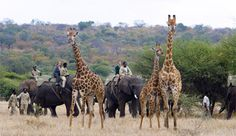 Game viewing from the back of an elephant