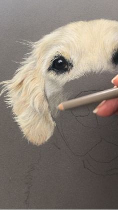 Cool Art Drawings, Pencil Art Drawings, Realistic Drawings, Art Drawings Sketches, Animal Drawings, Colorful Drawings, Color Pencil Art, Colored Pencil Artwork, Pastel Art