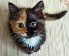 Yana The Two-Faced Cat Will Win Your Heart, Twice :https://www.petcha.com/yana-the-two-faced-cat-will-win-your-heart-twice-trending/?utm_source=GreaterGood