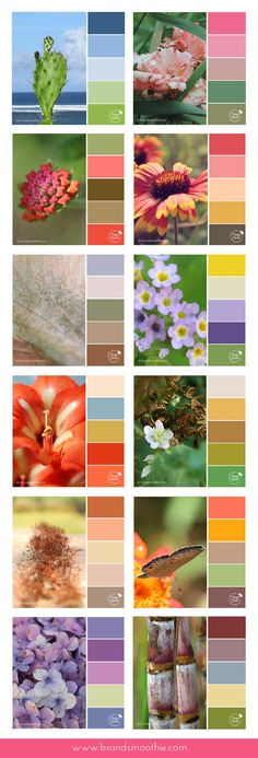 Nature inspired colour palette collection by Brand Smoothie. Ideal for entrepreneurs and bloggers.