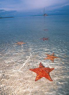 Starfish Beach, Bocas del Toro, Panama. My favourite beach in the entire world #LetsGoHoloHolo