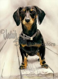 DACHSHUND SMOOTH COAT Dog Watercolor Giclee Art Print by k9stein