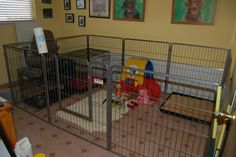 Awesome indoor puppy area