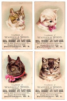 vintage cat trading cards for Warren & Wood, importers of china, crockery and fancy goods.