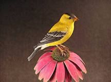 "American Goldfinch - Male on Cone Flower by Jerry Simchuk Wood Carving ~ 18"" x 5"""
