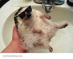 Cool Hedgehog | Cool People Shop