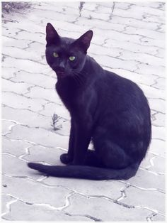 Black cat. I love them!  Beautiful cat. Incensewoman