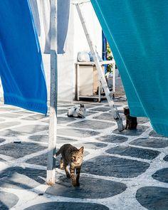 Mykonos by Eetu Ahanen Mykonos, Shag Rug, Cities, Rugs, Home Decor, Shaggy Rug, Farmhouse Rugs, Decoration Home, Room Decor