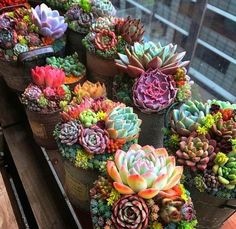 💐 Spruce up your space with these creatively potted succulents! - 💐 Spruce up your space with these creatively potted succulents! Succulents In Containers, Cacti And Succulents, Planting Succulents, Cactus Plants, Garden Plants, House Plants, Planting Flowers, Garden Hose, Garden Art