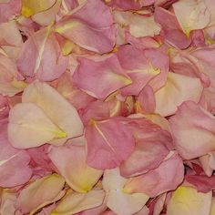 Sumptuous Romance Preserved Freeze Dried Rose Petals. Hard time choosing only one color rose petal? This is a blend of several colors of rose petals all wrapped into one! A stunning group of rose petals ranging from mango to pink colors all in one petal. How cool is that?