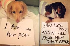 Dog Shaming features the most hilarious, most shameful, and never-before-seen doggie misdeeds. Join us by sharing in the shaming and laughing as Dog Shaming reminds us that unconditional love goes both ways. Funny Animal Photos, Dog Pictures, Funny Photos, Funny Animals, Cute Animals, Cat Memes, Funny Memes, Funny Cute, Hilarious