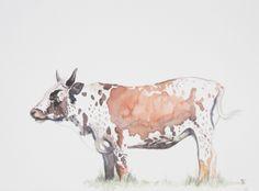 Water colour Cow painting. Art by Tess Reid's Fine Art