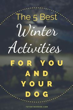 The winter is the perfect time to enjoy the outdoors with your dog.  There are lots of outdoor winter actitvities you can do with your dog.  Click throught to check out the 5 best winter activities for you and your dog. Therapy Dog Training, Online Dog Training, Dog Training Tips, Dog Activities, Winter Activities, Jumping Dog, Me And My Dog, Group Of Dogs, Dog Health Care