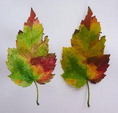 D.G 5, E4; Folhas de Outono; Tratamento das cores; Maneira de trabalho: Aguarela