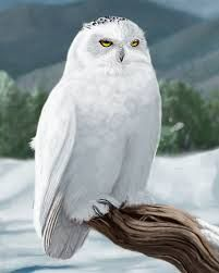 Image result for snowy owls