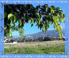 Unbetitelt Tenerife, Mountains, Nature, Plants, Travel, Photos, City, Naturaleza, Viajes