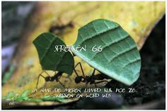 Good Morning Girls NEDERLAND: Spreuken 6