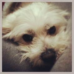 Mon chien d'amour